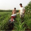 小型开沟培土机厂家小型开沟培土机视频小型开沟培土机价格
